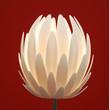 roleta: floor lamp  flower