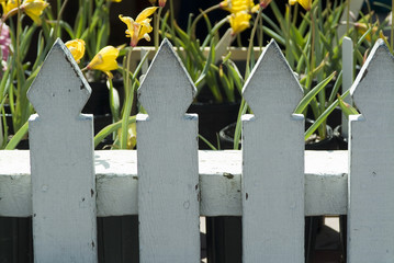 white fence and yellow flowers