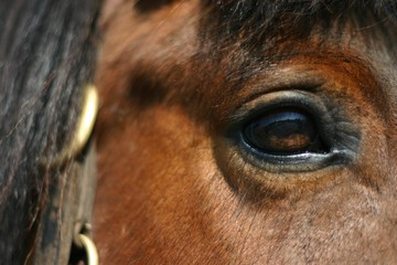 mirror - horse eye
