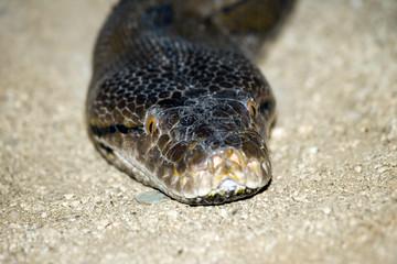 serpiente3549