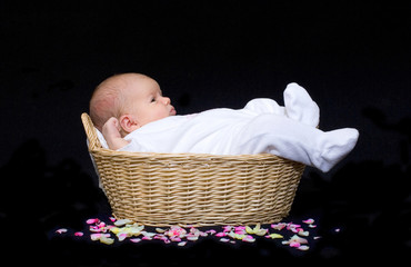 newborn baby in a basket with flower petals