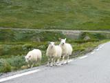 roadside pasture poster