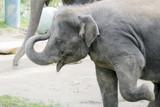 elephant pose poster
