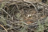 eagle nest, whole circle poster