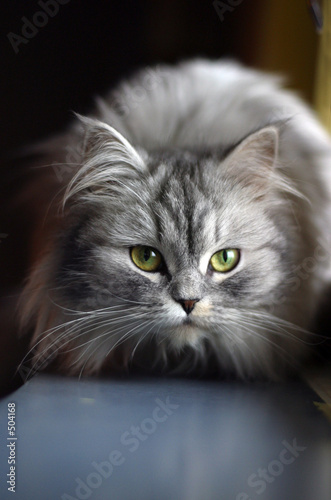 poster of cat on a window sill