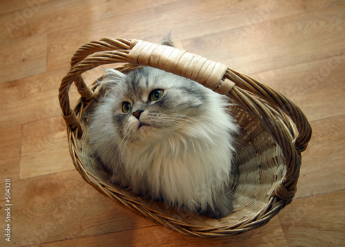 poster of cat in a basket - 2