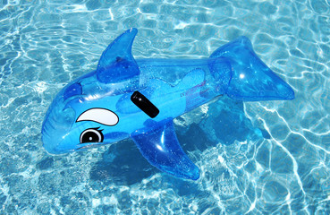 inflatable dolphin on blue swimming pool