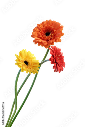 Papiers peints Gerbera orange and yellow gerbera