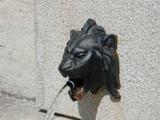 tête de lion poster