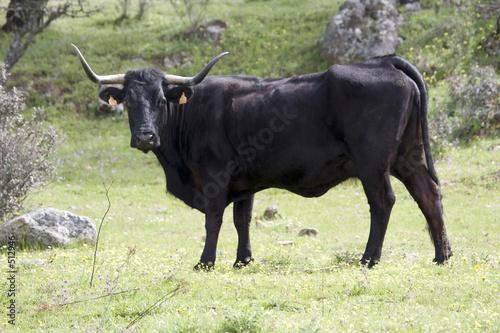 Foto Murales vacas3645