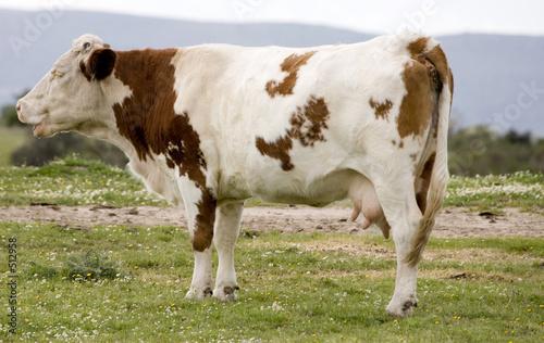 Foto Murales vacas3626
