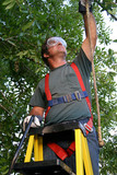 tree trimmer safety harness poster