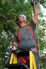 tree trimmer safety harness