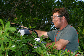 tree trimmer with saw