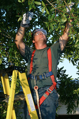 tree surgeon on ladder