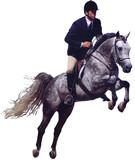 grey hunter jumper horse poster