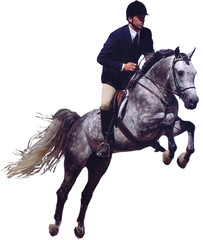 grey hunter jumper horse