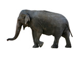 elephant with clipping path poster