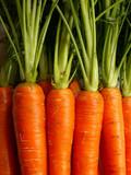 carrots - 519343