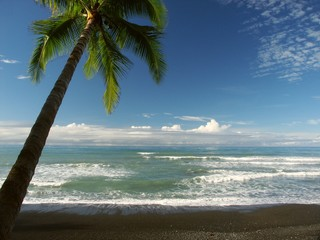 seaview with palmtree at punta banco