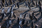 pinguins de magellan au chili poster