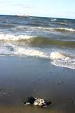 pollution sur une plage poster