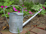 watering can in garden poster