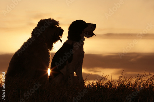 dog friends at sunset