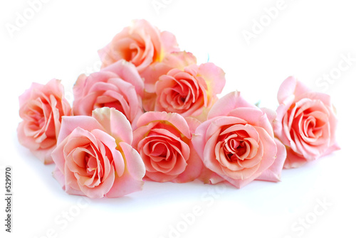 Fotobehang Rozen pink roses on white