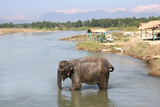 chitwan elephant - nepal poster