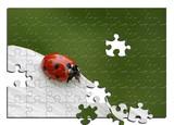 marienkäfer, puzzle, poster