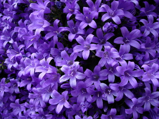 le violet, quelle belle couleur !