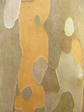 camouflage bark poster