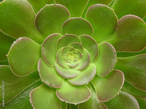 green cacti flower