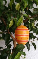 orange hanging egg