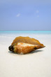 big sea shell lying on the white coral sand beach against  sea a