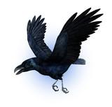 raven flying poster