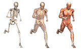 anatomical overlays 2 poster