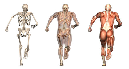 anatomical overlays 3