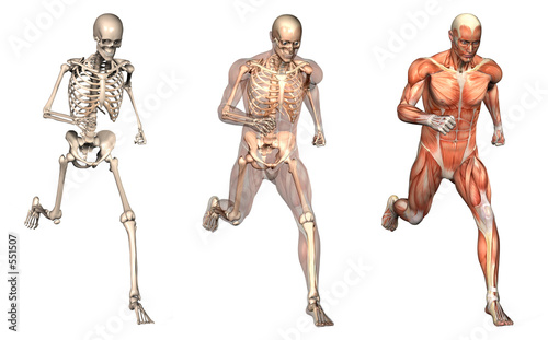 anatomical overlays 2
