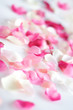 roleta:  rose petals