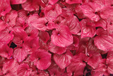 pink foliage poster
