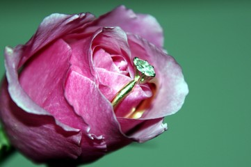 rose of engagment