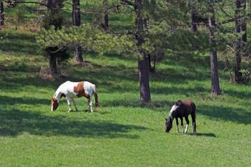 horses & meadows 2a