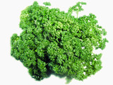 parsley (persil)