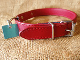 dog collar with identification tag poster