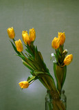 bouquet of yellow tulips poster