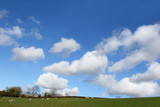 springtime pasture poster