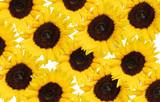 bouquet de tournesol poster