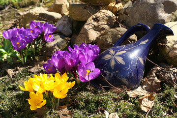 spring flowers in a garden.